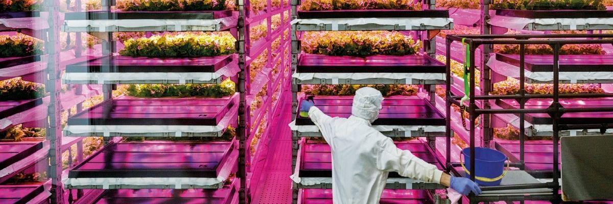 Frontera de la industria de la alimentación - banner